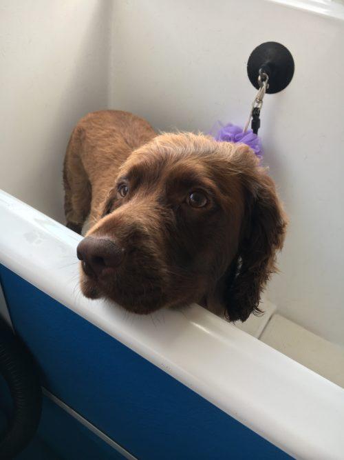 Dog grooming maidenhead